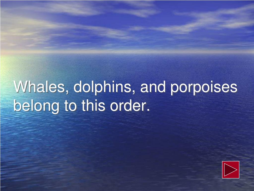 Whales, dolphins, and porpoises belong to this order.