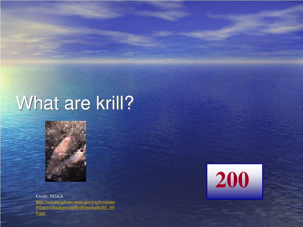 What are krill?