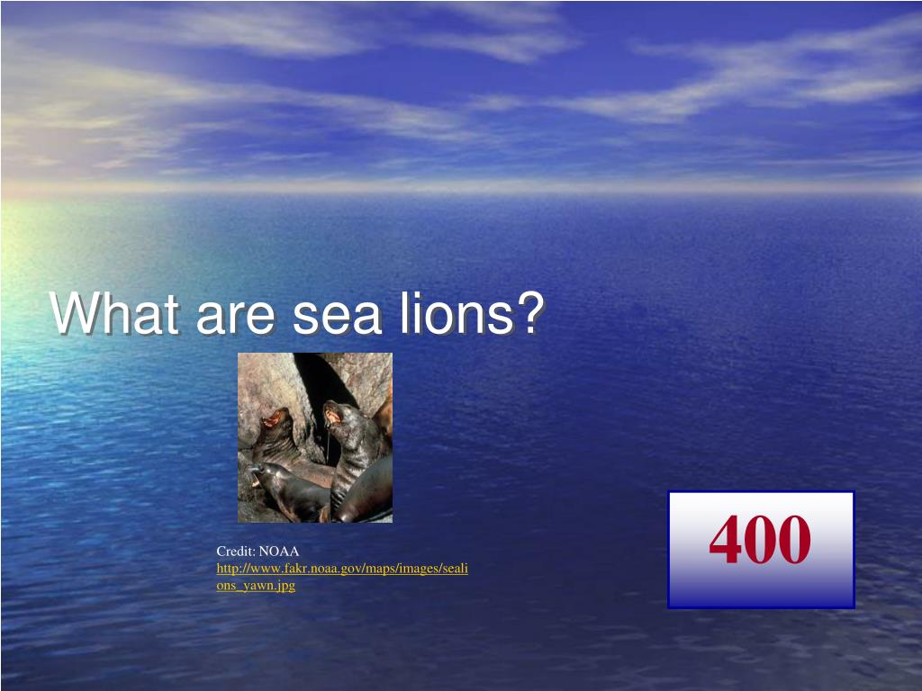 What are sea lions?