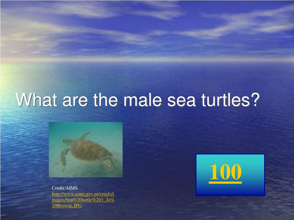 What are the male sea turtles?
