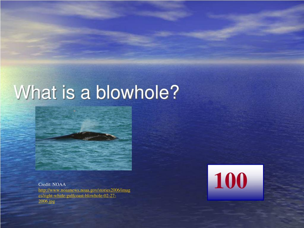 What is a blowhole?