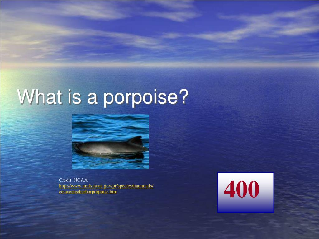 What is a porpoise?