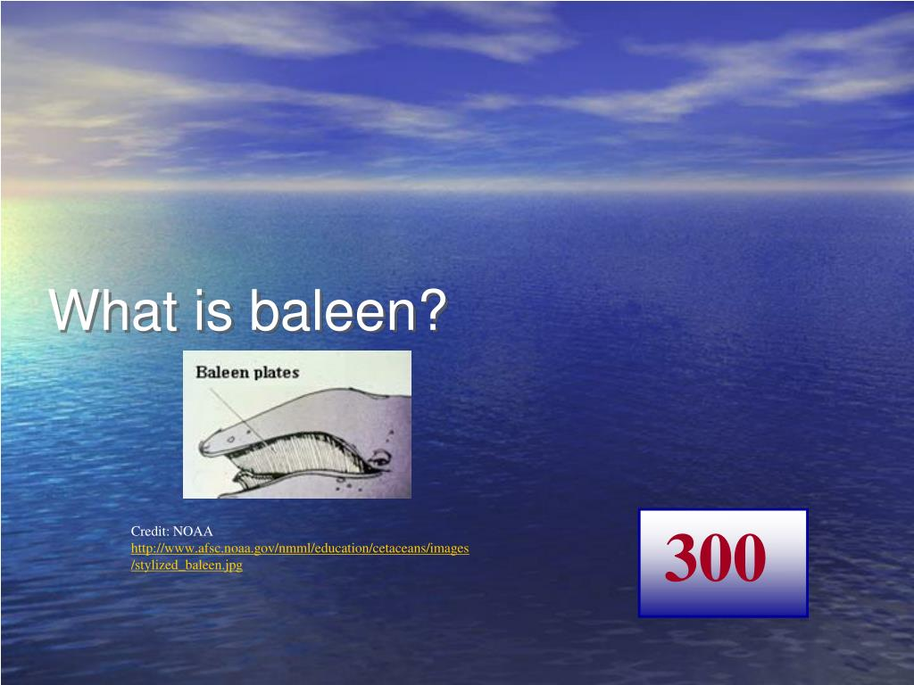 What is baleen?
