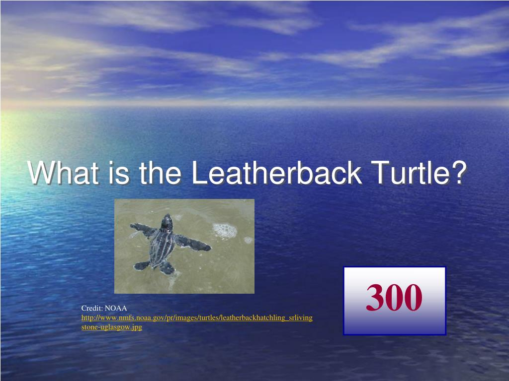 What is the Leatherback Turtle?