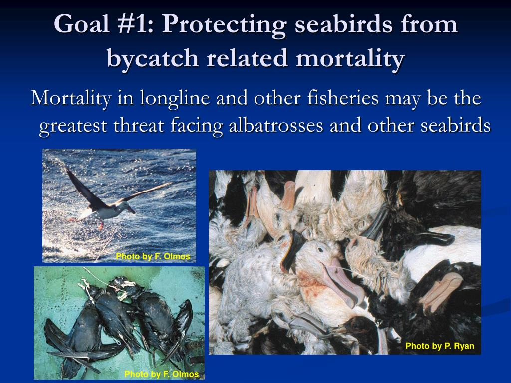 Goal #1: Protecting seabirds from bycatch related mortality
