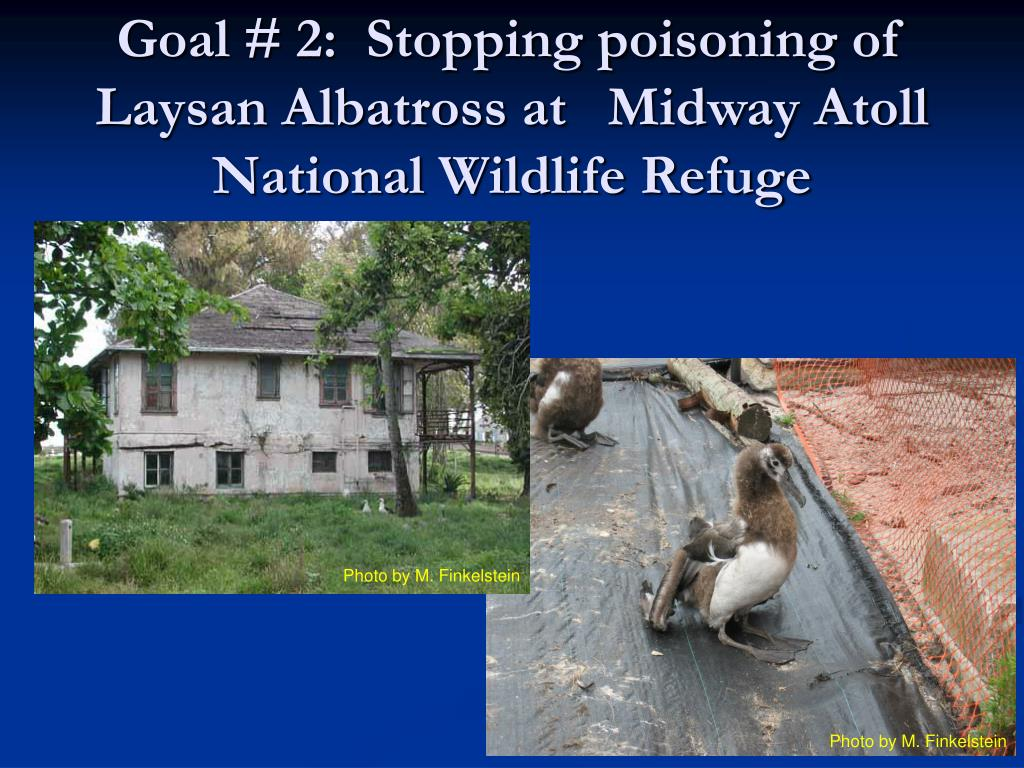 Goal # 2:  Stopping poisoning of Laysan Albatross at 	Midway Atoll National Wildlife Refuge