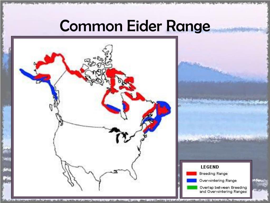 Common Eider Range
