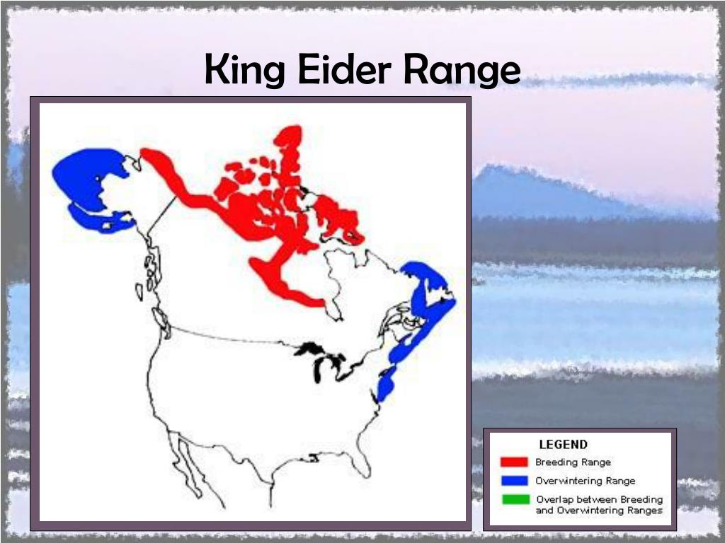 King Eider Range