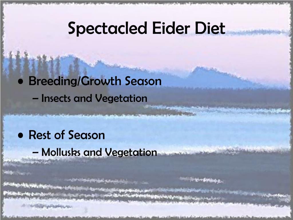 Spectacled Eider Diet