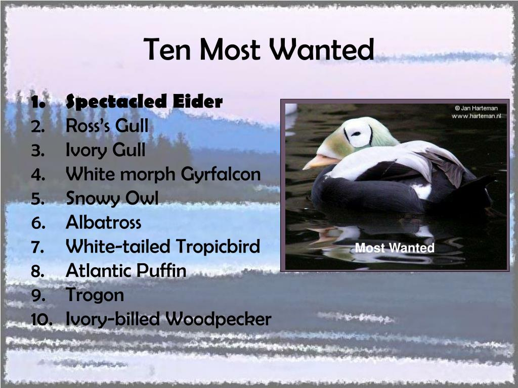 Ten Most Wanted