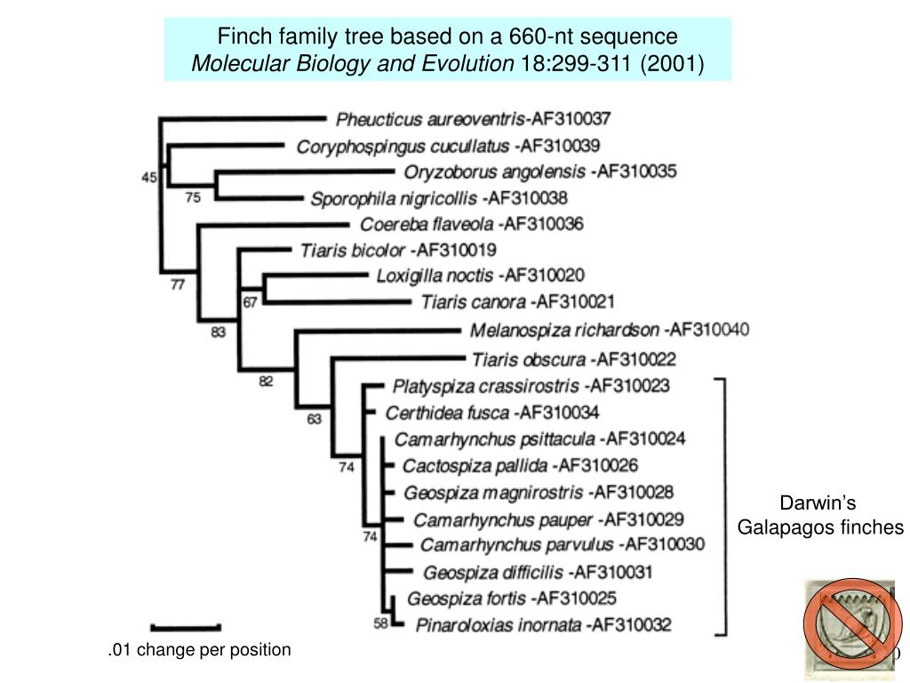 Finch family tree based on a 660-nt sequence