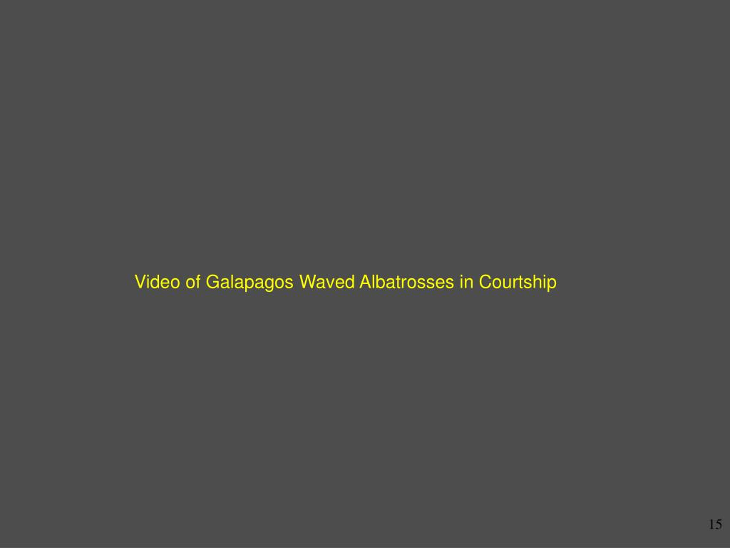 Video of Galapagos Waved Albatrosses in Courtship