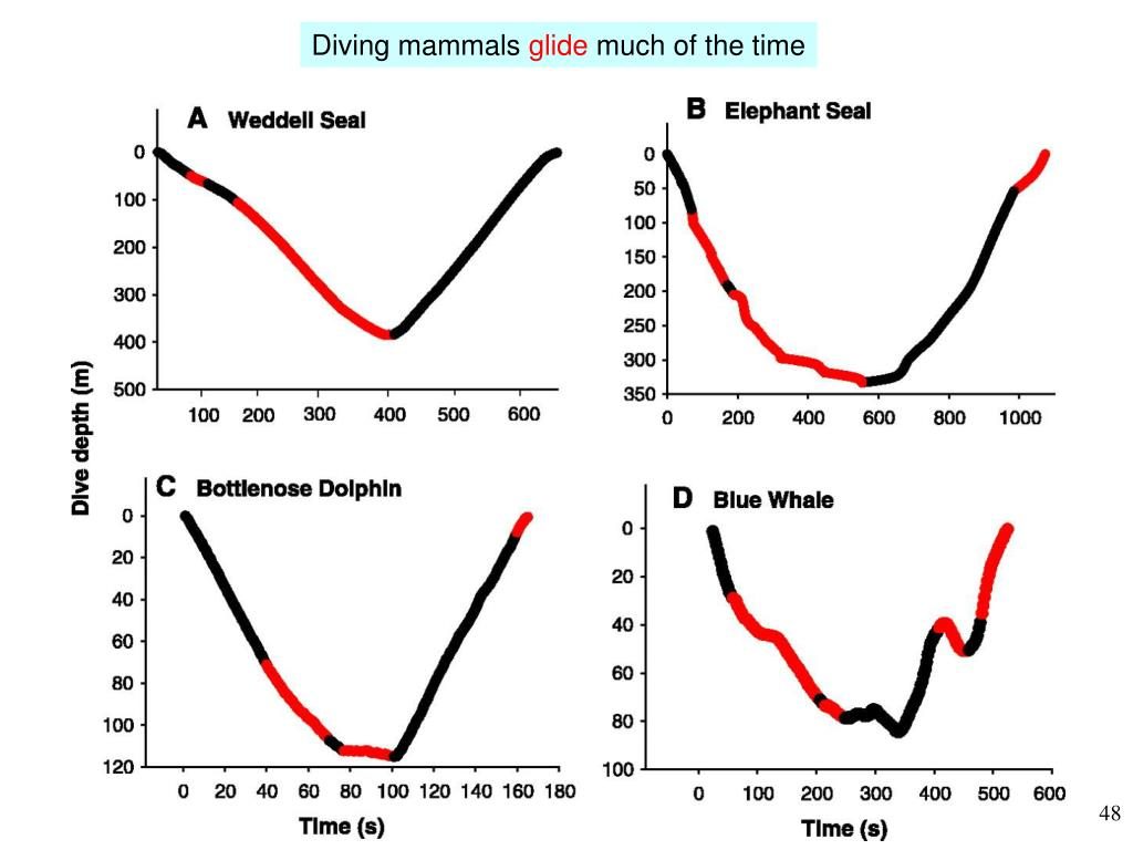 Diving mammals