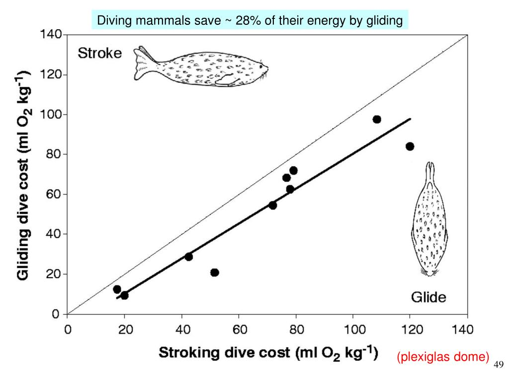 Diving mammals save ~ 28% of their energy by gliding