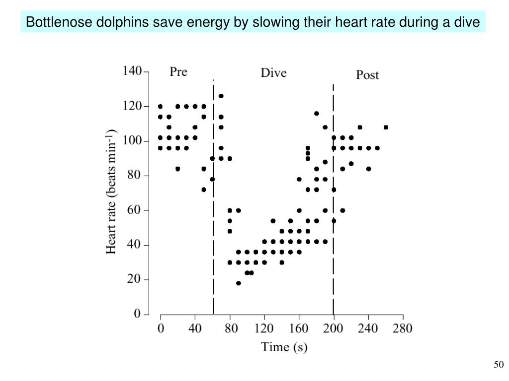 Bottlenose dolphins save energy by slowing their heart rate during a dive