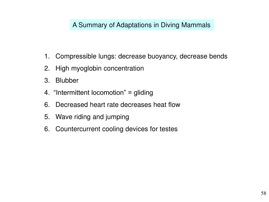 A Summary of Adaptations in Diving Mammals