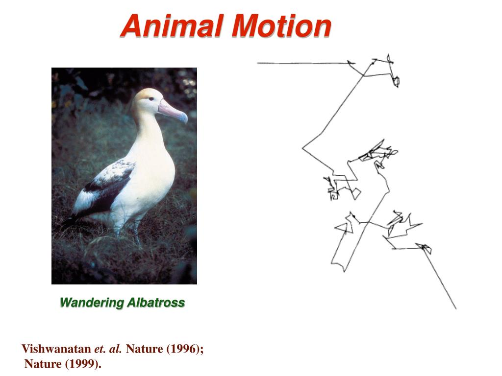 Animal Motion