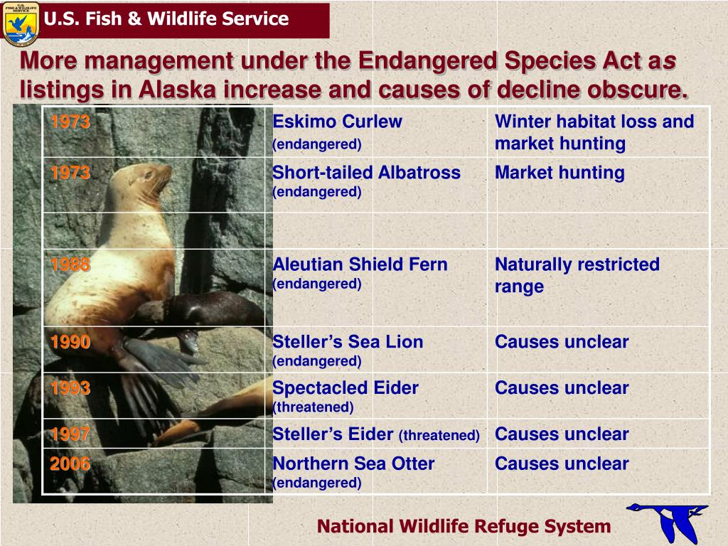 More management under the Endangered Species Act a