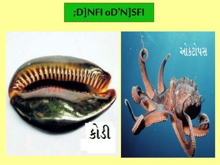 ;D]NFI oD'N]SFI