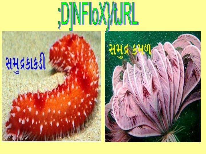 ;D]NFIoX}/tJRL
