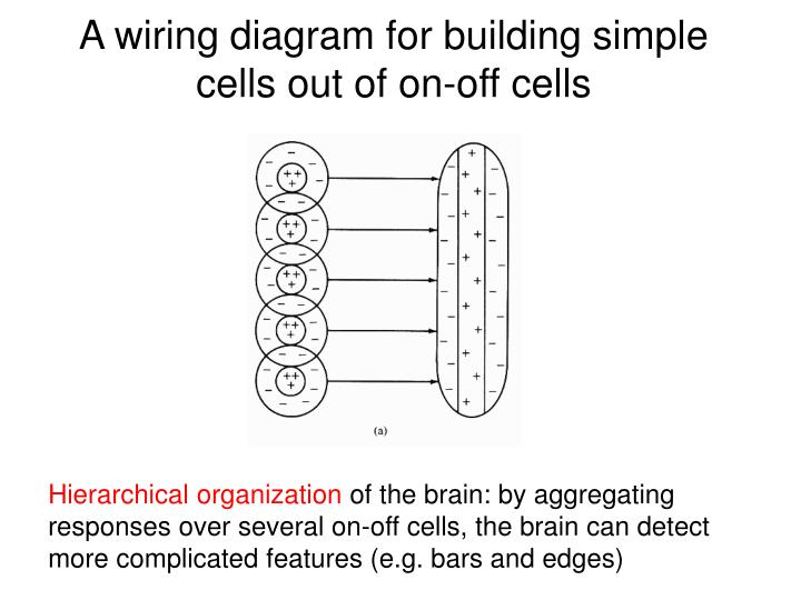 A wiring diagram for building simple cells out of on-off cells