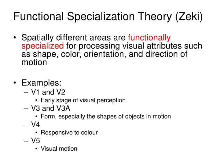 Functional Specialization Theory (Zeki)