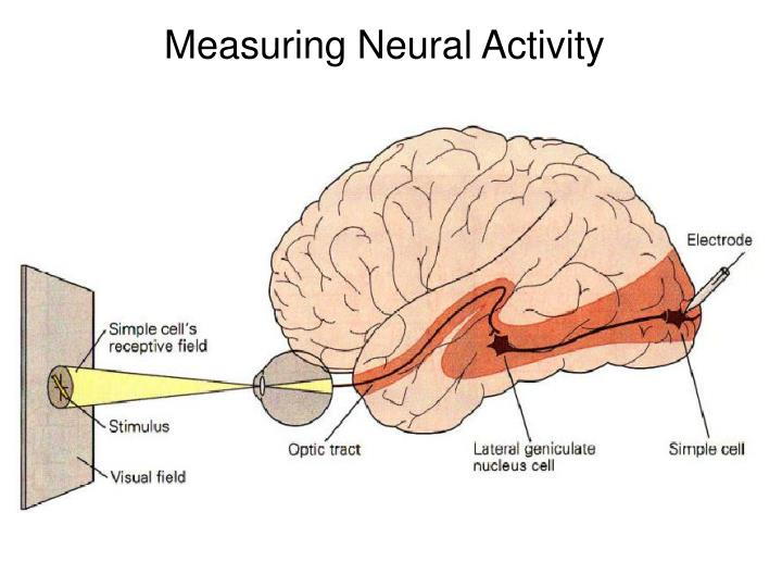 Measuring Neural Activity