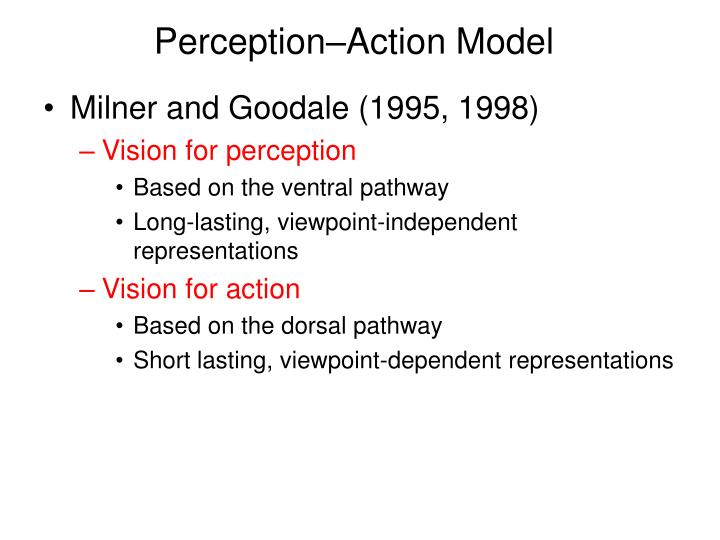 Perception–Action Model