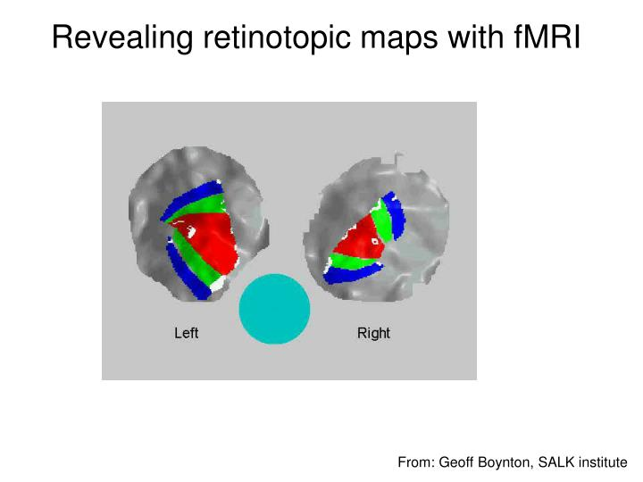 Revealing retinotopic maps with fMRI