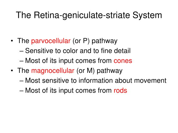 The Retina-geniculate-striate System