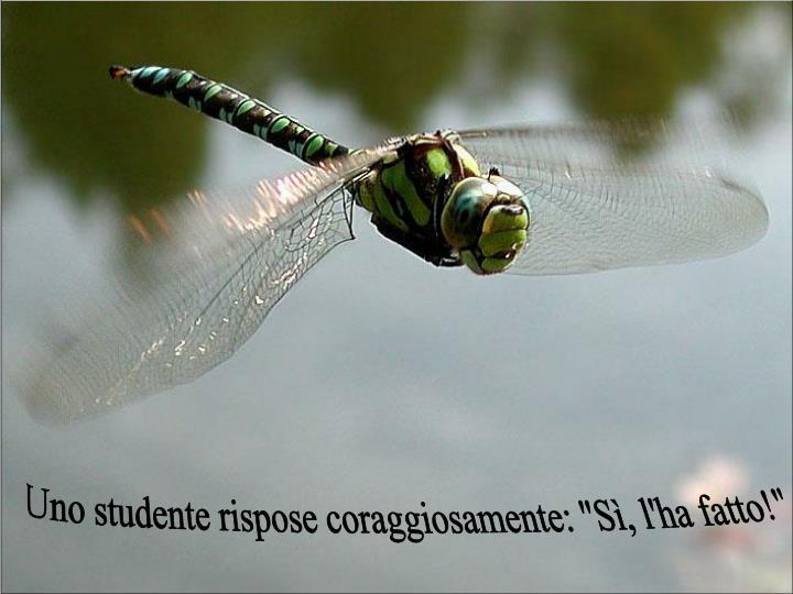 """Uno studente rispose coraggiosamente: """"Sì, l'ha fatto!"""""""