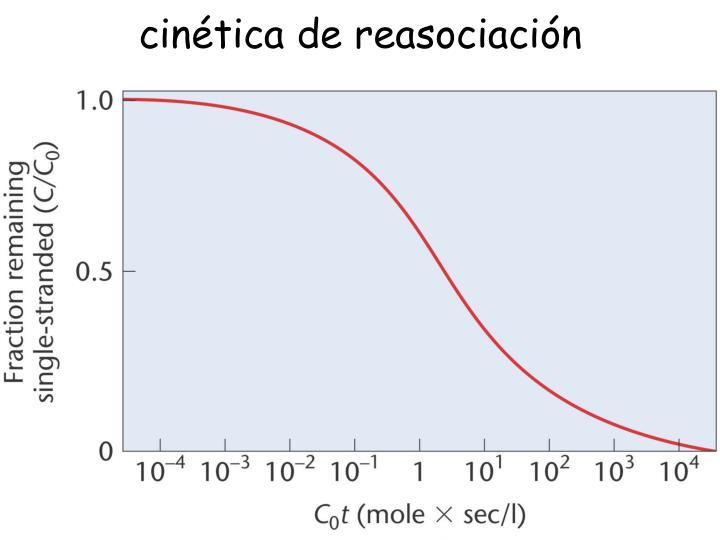 cinética de reasociación