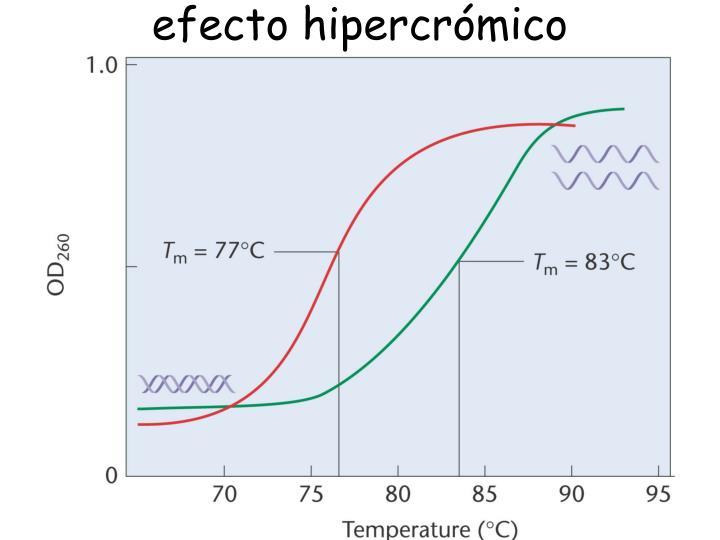 efecto hipercrómico