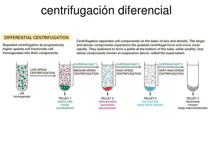 centrifugación diferencial