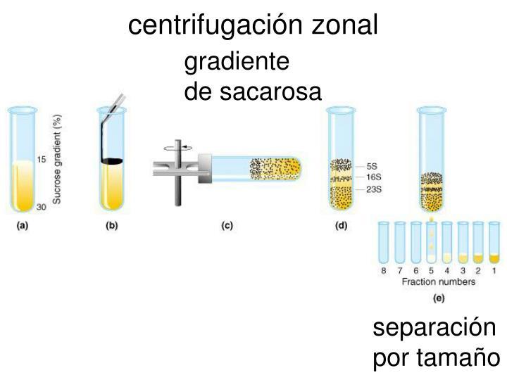 centrifugación zonal