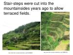 stair steps were cut into the mountainsides years ago to allow terraced fields
