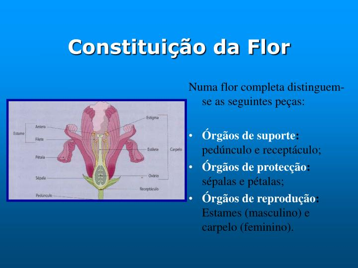 Constituição da Flor
