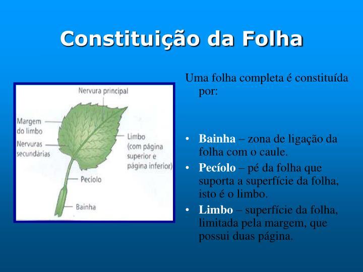 Constituição da Folha