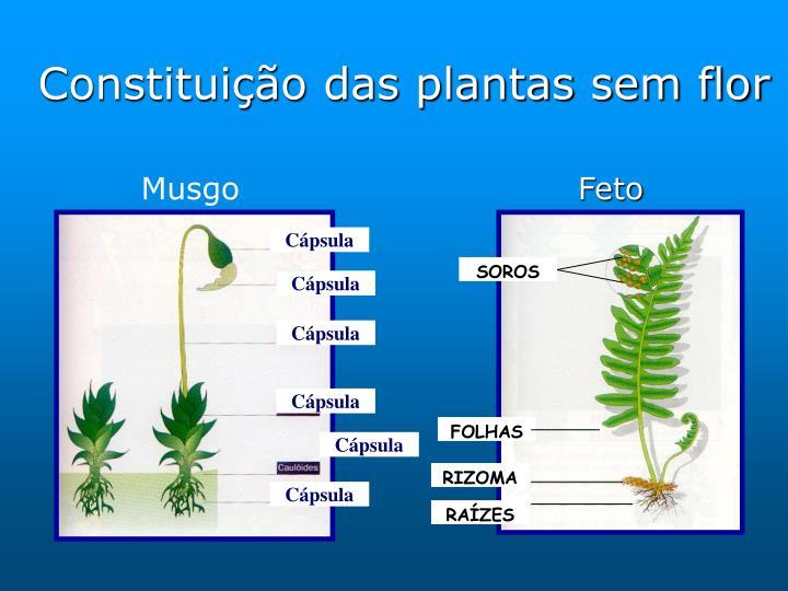 Constituição das plantas sem flor