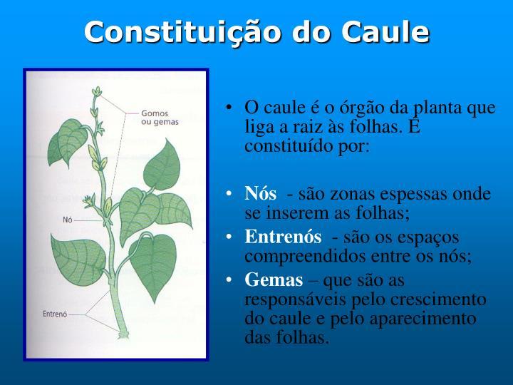 Constituição do Caule