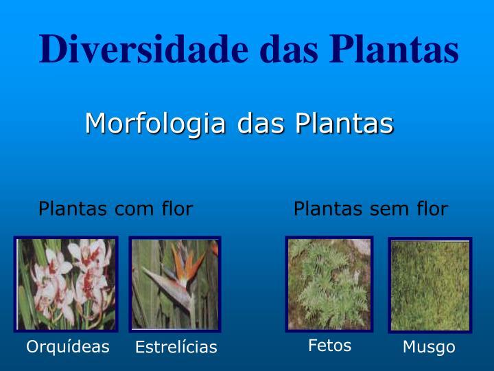 Diversidade das Plantas