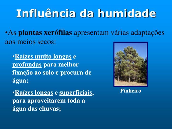 Influência da humidade
