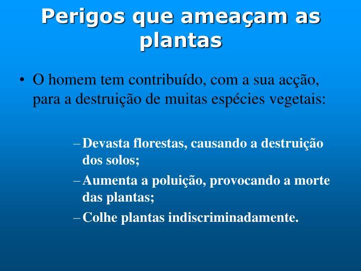 Perigos que ameaçam as plantas