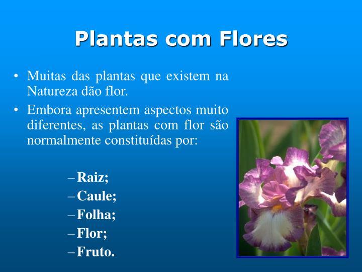 Plantas com Flores