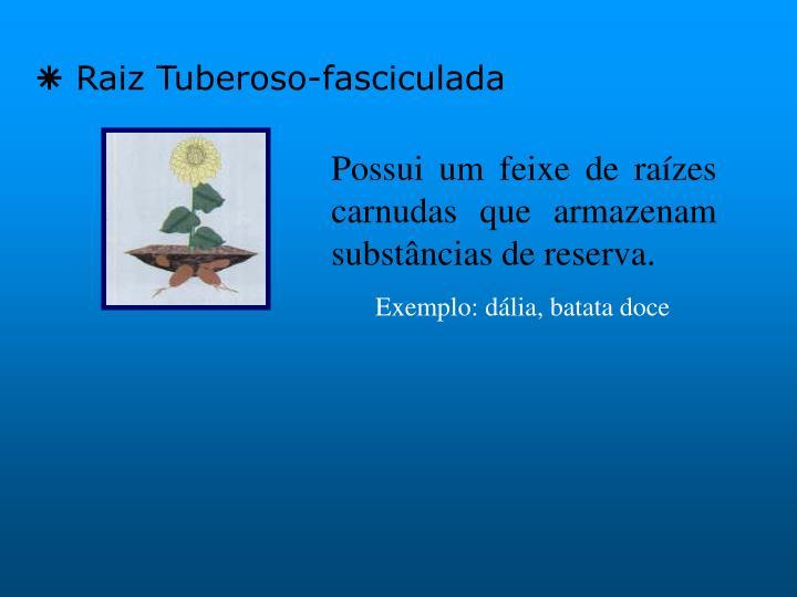 Raiz Tuberoso-fasciculada