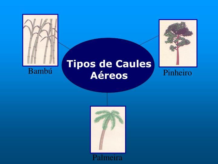 Tipos de Caules Aéreos