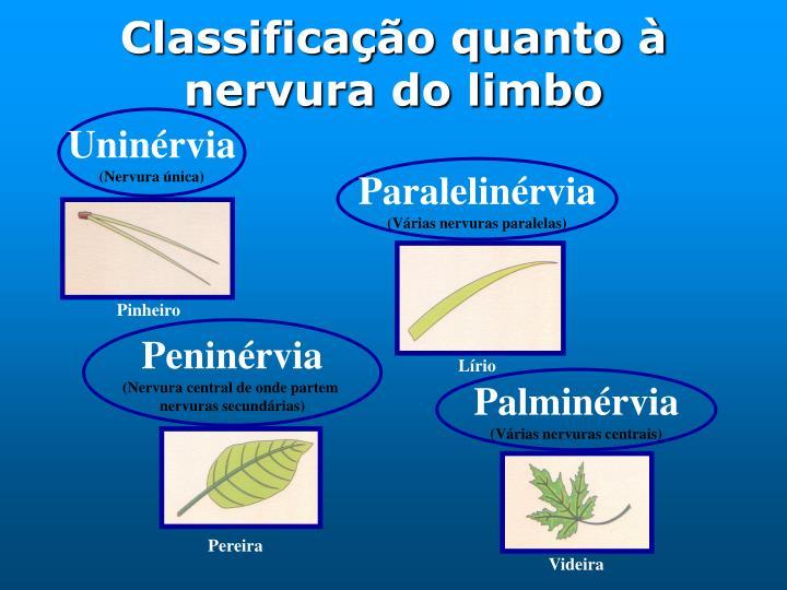 Classificação quanto à nervura do limbo