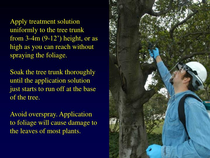 Apply treatment solution uniformly to the tree trunk from 3-4m (9-12') height, or as high as you can reach without spraying the foliage.