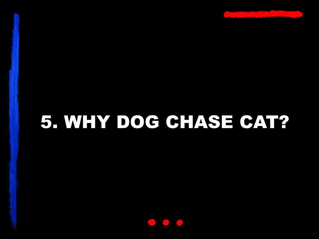 5. WHY DOG CHASE CAT?