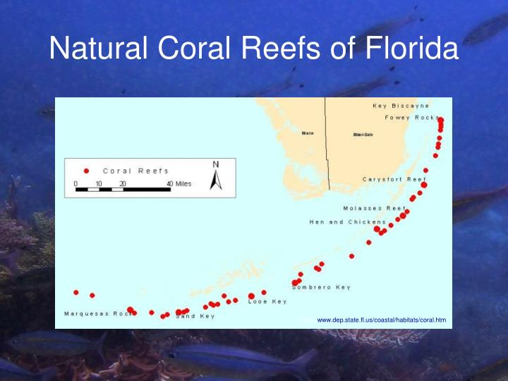 Natural Coral Reefs of Florida